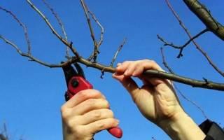 Как выбрать садовый кусторез: ручной, электрический, аккумуляторный или бензиновый
